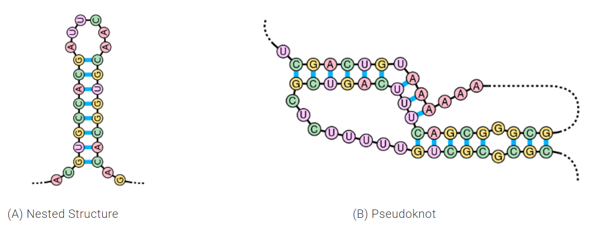 RNA nested structure and pseudoknot