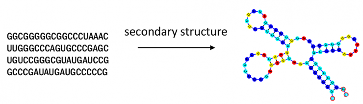 rna_secondary_structure