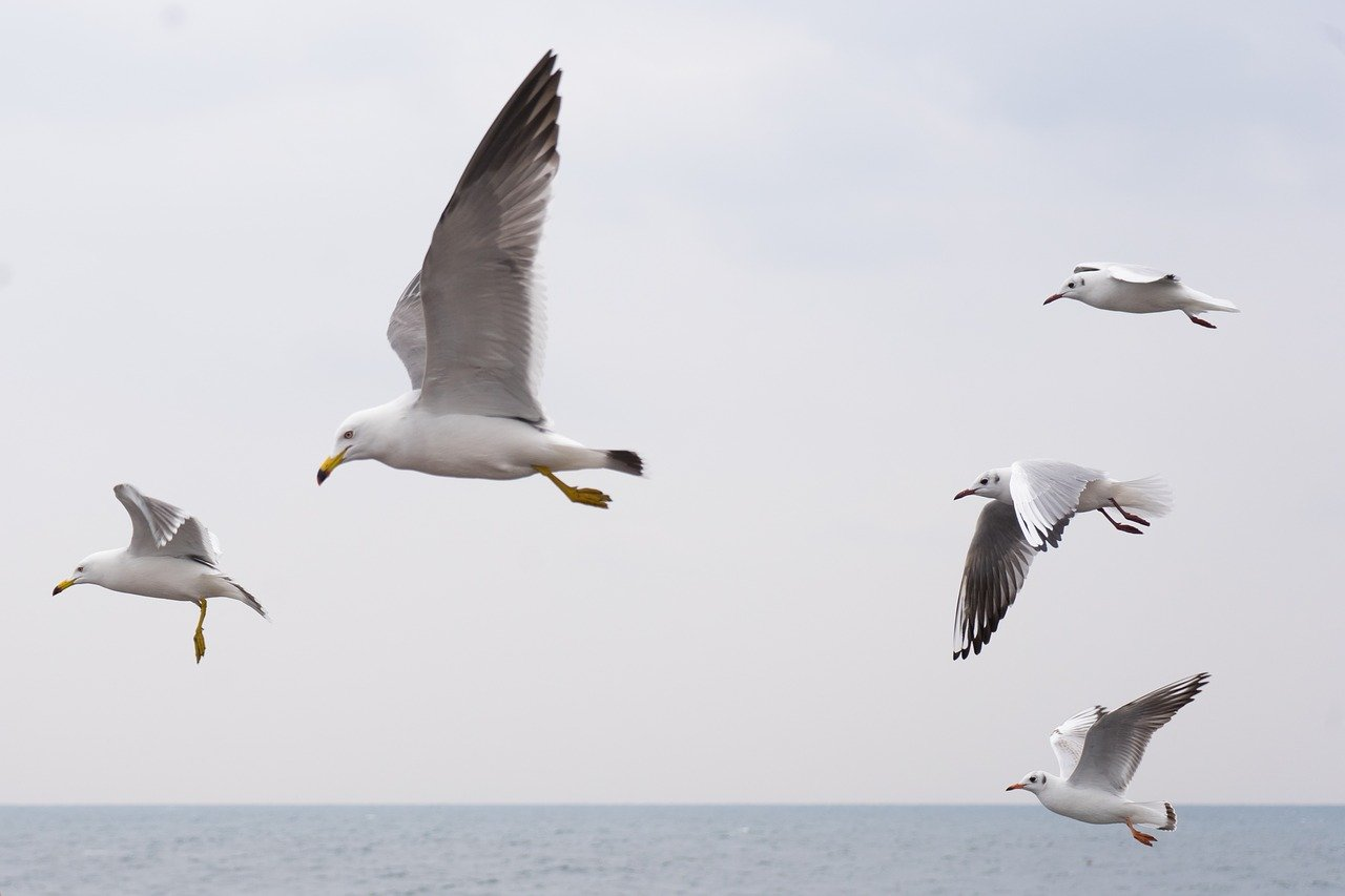 Seagulls flying | AIhub