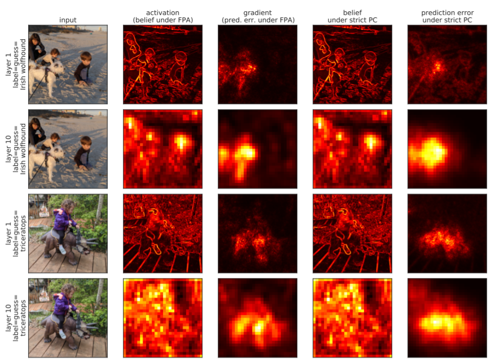 Magnitude of activations, beliefs, and prediction errors in a convolutional neural network pre-trained on ImageNet. T